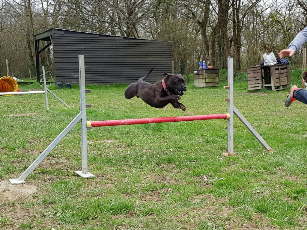 Pome's World - Olive & Agility