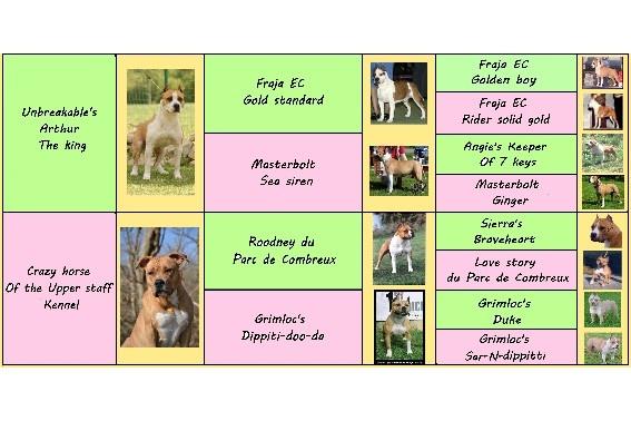 du Parc de Combreux - American Staffordshire Terrier - Portée née le 31/03/2012