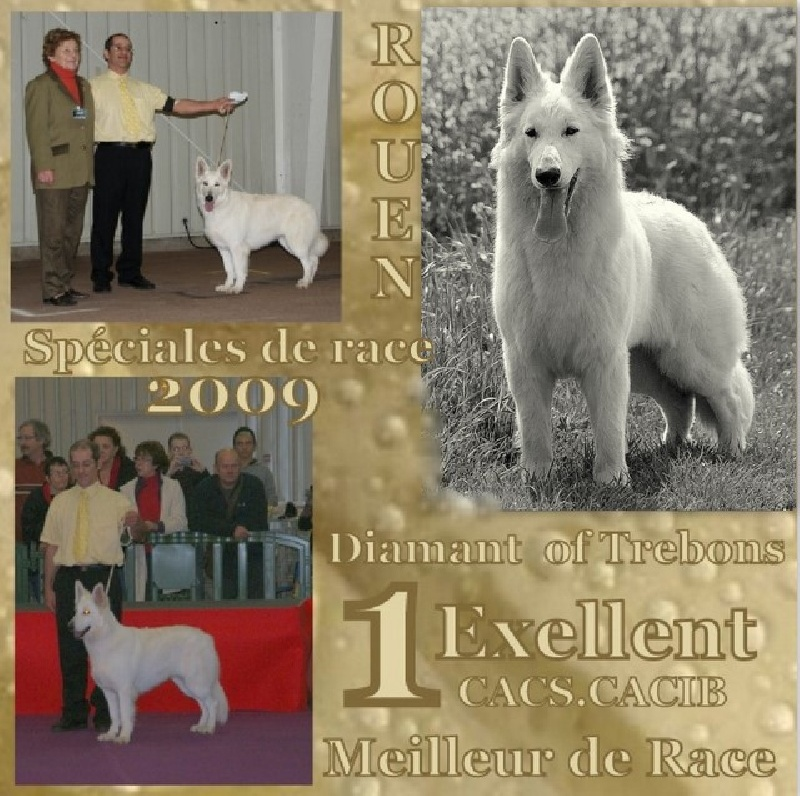 CH. Diamant of trebons berger blanc