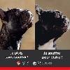- CA BOUGE en Suisse - NON aux chiens sans nez et surtypés - YES
