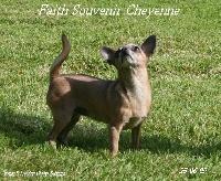 Faith Souvenir Cheyenne
