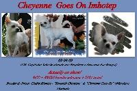 CH. cheyenne goes on Imhotep