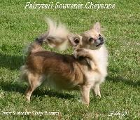 CH. Fairytail Souvenir Cheyenne
