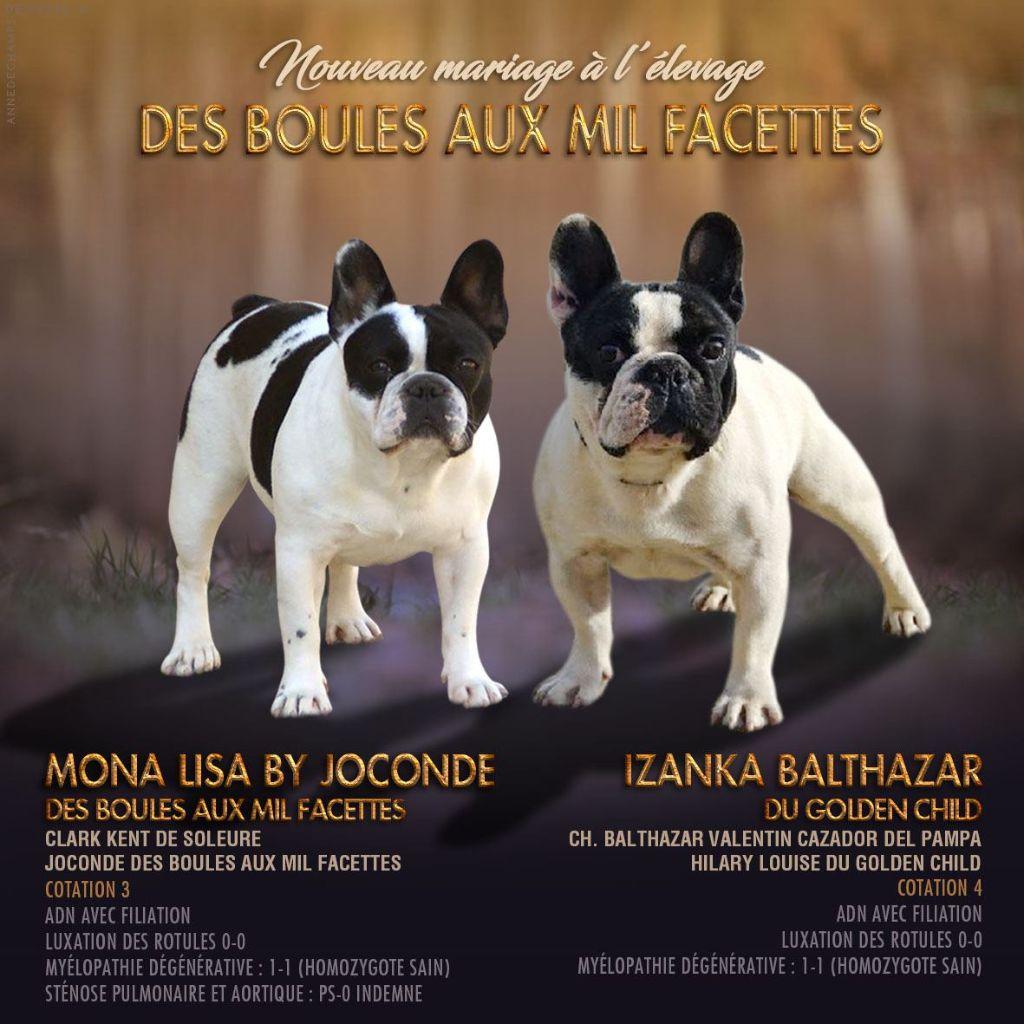 des boules aux mil facettes - Bouledogue français - Portée née le 03/11/2019