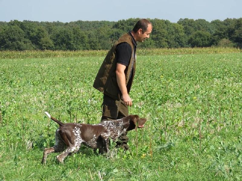 Publication : des champs de blé doré  Auteur : Olivier BRUNET