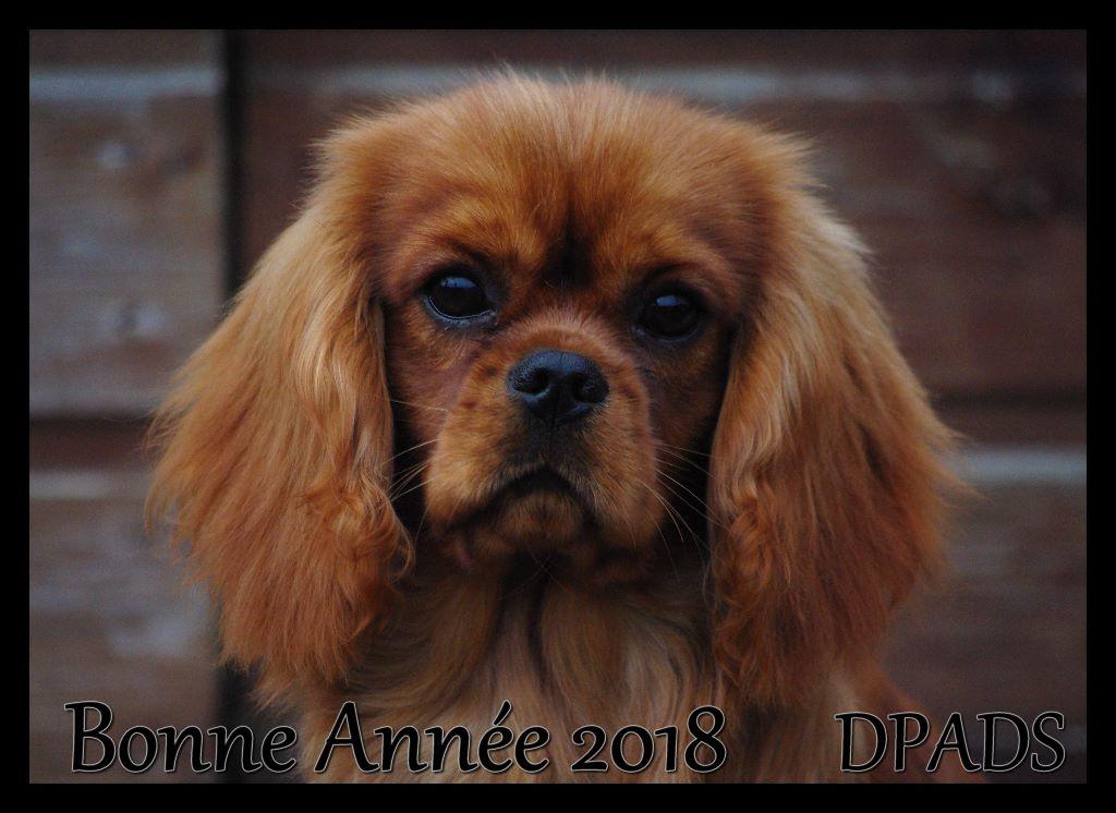 des petits Anges de Sophie - BONNE ANNEE 2018