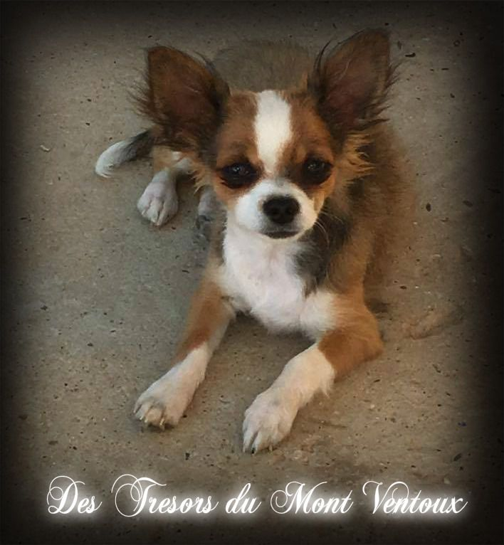 Publication : des Tresors du Mont Ventoux