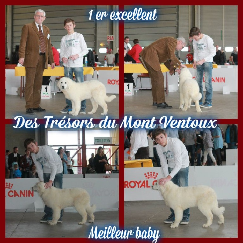 Publication : des Tresors du Mont Ventoux  Auteur : Vanessa GROSSEMY
