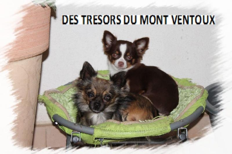 Les Tresors Du Mont Ventoux 28 Images Mont 233 E Du
