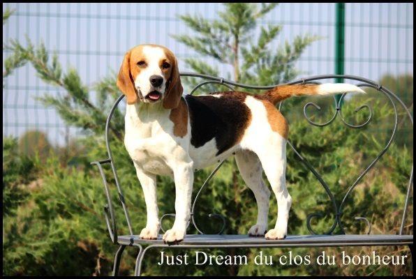 just dream du clos du bonheur chien de race toutes races en tous departements france inscrit sur. Black Bedroom Furniture Sets. Home Design Ideas