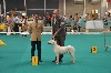 - GOLDEN DOG TROPHY  exposition internationale de Liege