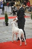 - Brussels DogShow