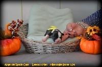 Angel del Ronda Casa - Staffordshire Bull Terrier - Portée née le 18/09/2018